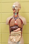 get-wired-allied-health-2014 (244 of 357)